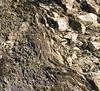 schist with pegmatite