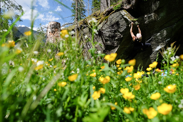 Climbing perfect boulders among wildflowers in Zillertal, Austria