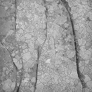 Rock Detail #1