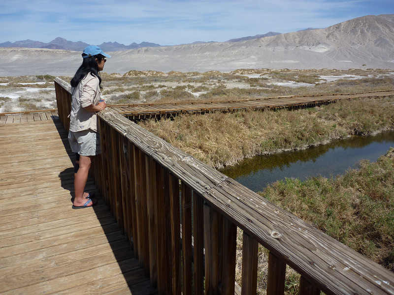 stalking the Desert Pupfish
