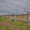 Fence With Birds, Broad Channel