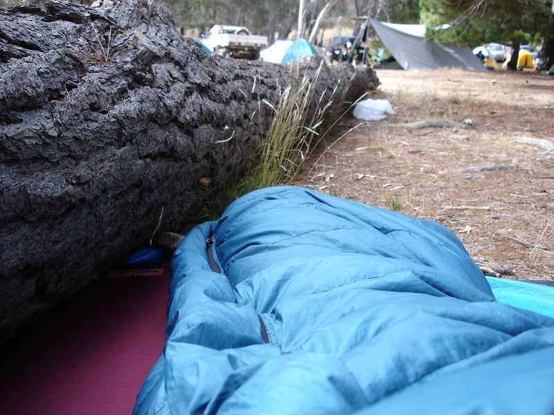 Early morning after sleeping out in the Pines - the view from my sleeping bag