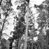 1980. Steve Lassche (NZ) belaying Brent Davis (NZ) on the 5.9 Pine (18) at Mt Arapiles.