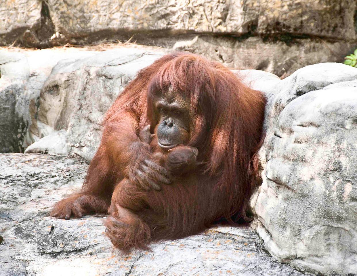 OrangutanMom