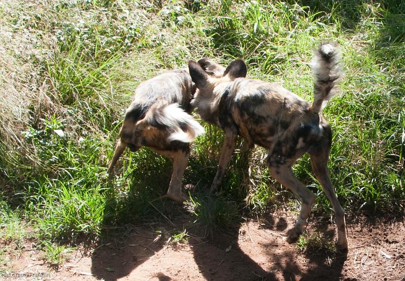 Van Dyk Cheetah Reserve_03_23_153053-1