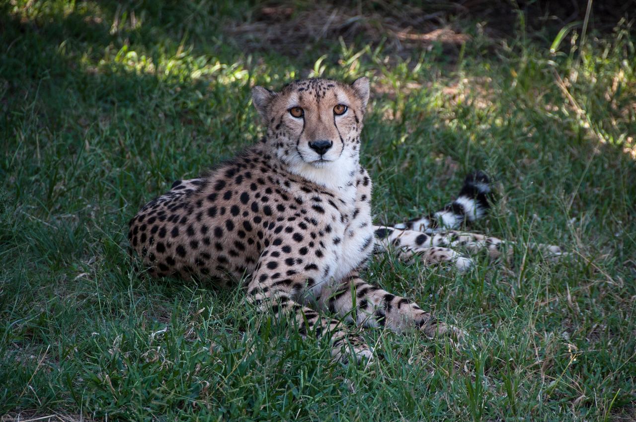 Van Dyk Cheetah Reserve_03_23_154432