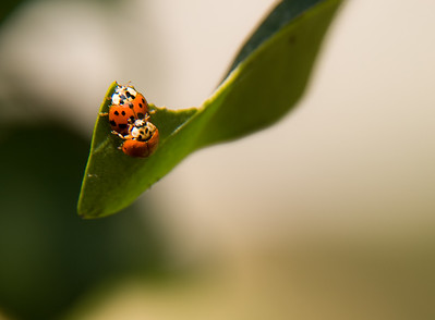 Insects and Small Creatures