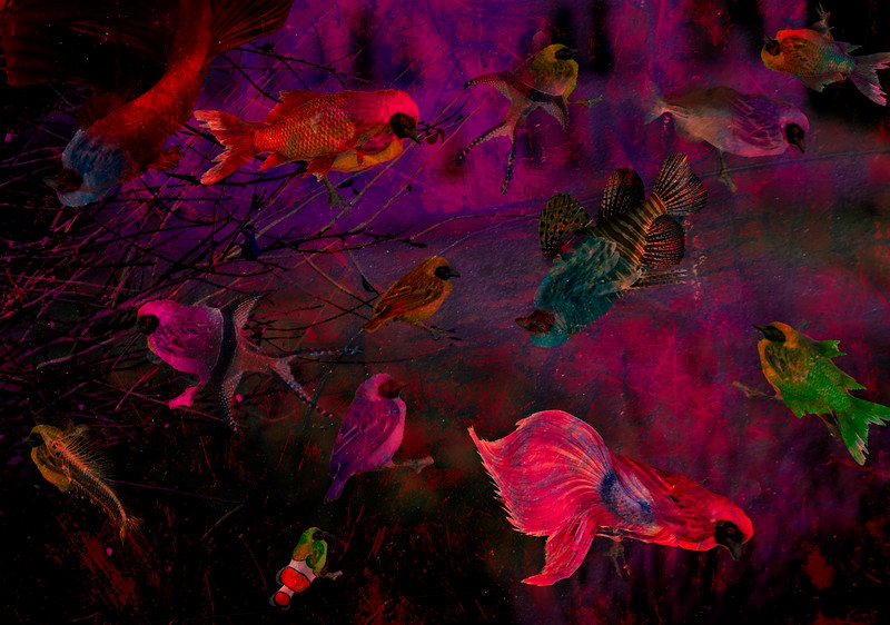 BirdFish1