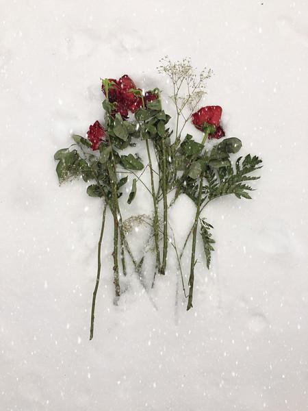 Roses in Snow-2