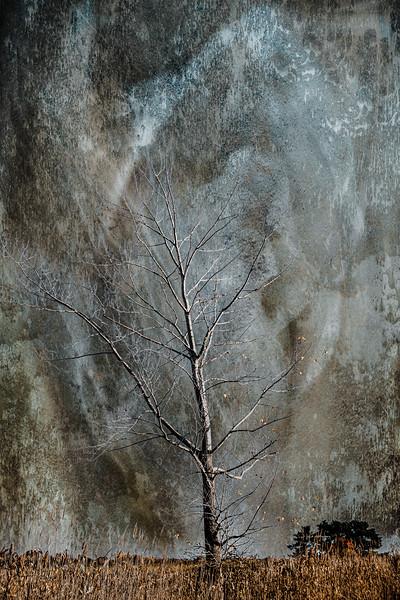 Belle Island Tree-10