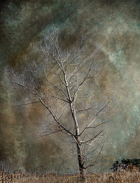 Belle Island Tree