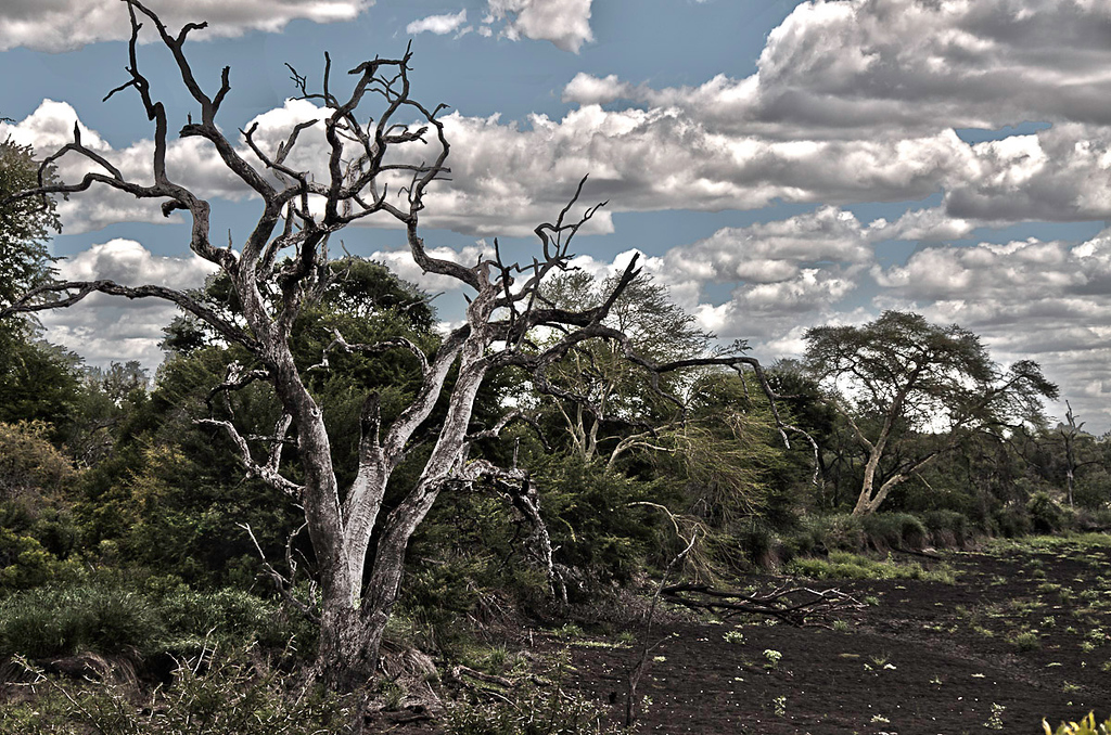 Dead_Tree_HDR