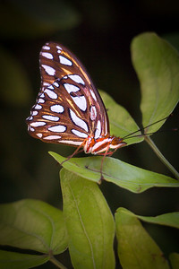 2015 Nicholas Conservatory Butterfly Exhibit