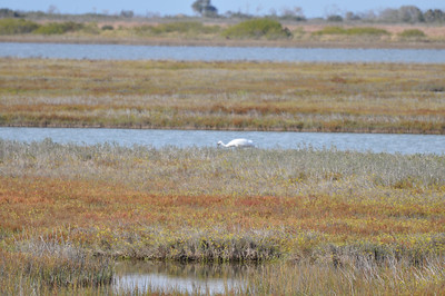 2012 Rockport Whooping Cranes
