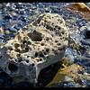 Honeycomb-Weathered Rock