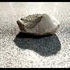 White Quartz and Fossil