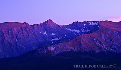 Pink Solace On Mount Julian