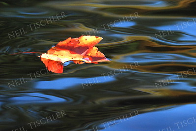 #774  A maple leaf floating by.