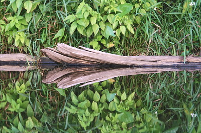 #893  A driftwood log reflected