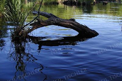 #086  Fallen tree branch in pond