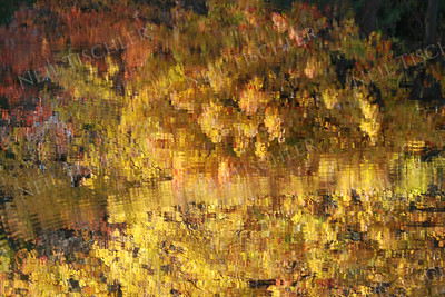 #554  Autumn foliage reflections