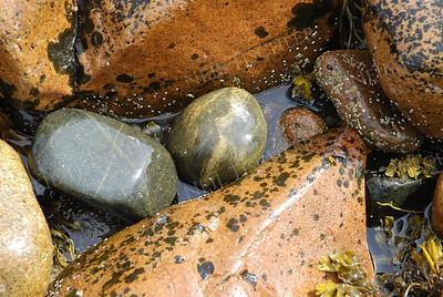 #553  Seashore stones at Acadia National Park, Maine.