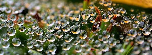 #1095  Tiny water droplets populating the intersections of a spider web.   This is a panoramic crop with a ratio of 2.75 x 1.