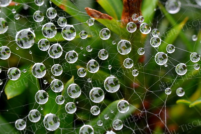 #1094  Looking Earth-like, these tiny water droplets form at intersections of a spider's web.