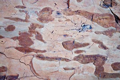 Old Yeller - Cherty Limestone detail