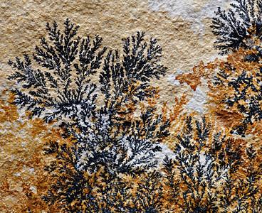 Manganese Dendrites - Solnhofen Limestone, Jurassic,  Germany