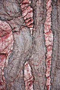Metamorphic - boudinage detail