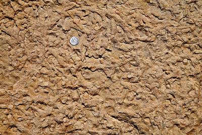 Feeding trail netowork exposed on a bedding plane Ferron Sandstone, Cretaceous