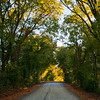 The Old Millwood Cemetery road.