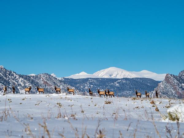 Elk Divide