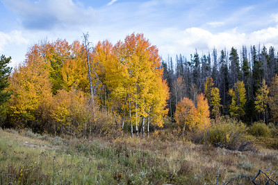 """""""Fall color in the Rockies"""""""