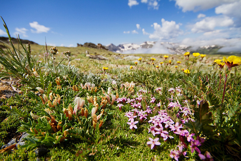 Some small, fragile flowers on the alpine tundra.
