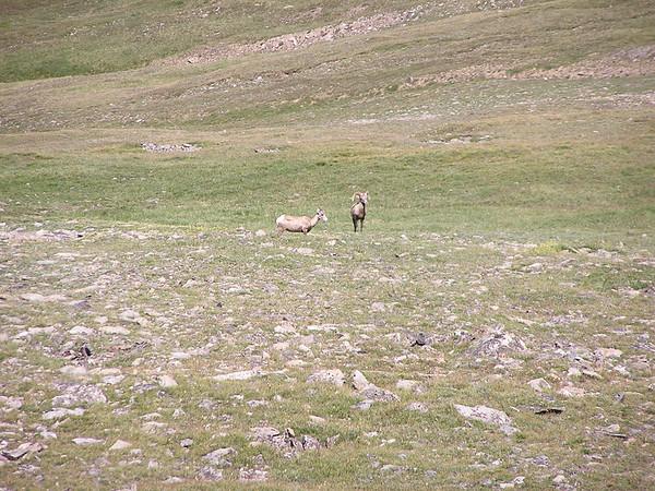 Trail Ridge Road, RMNP, Aug 9, 2007