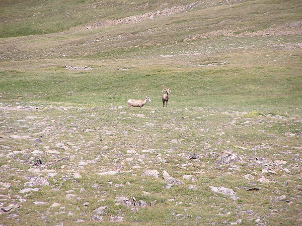 Trail Ridge Road, RMNP, Aug 9, 2007