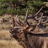 Elk 4730b