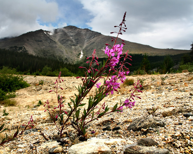 """""""Alone on the Mountain"""" by Shane, 17 