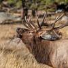 Elk 4718