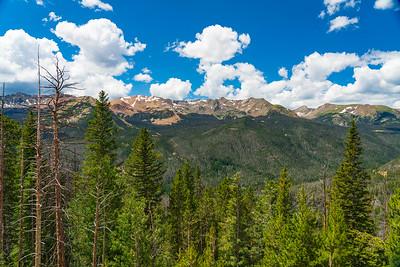 Evergreens on the High Colorado Rockies