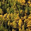 Autumn Foliage _MG_5448