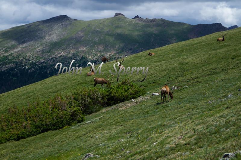 Elk Altitude