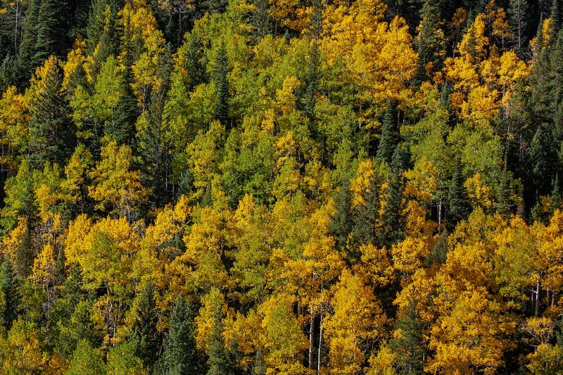 Foliage 5447