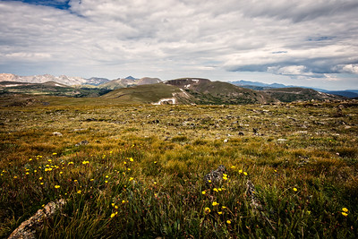 Alpine Tundra off Trail Ridge Road