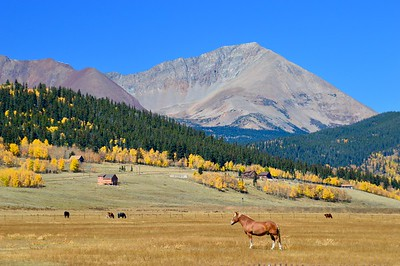 Mount Guyot rises above the pastures near Jefferson, Colorado