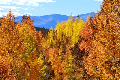 Autumn fire against the backdrop of the Sawatch Range