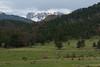 Elk Herd, Upper Beaver Meadow