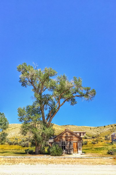 Bannack State Park building and tree
